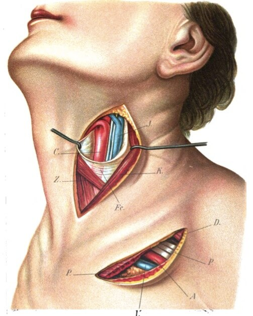 hormone-thyroid connection