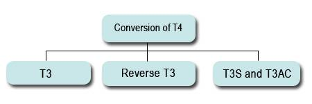 conversionoft4-opt